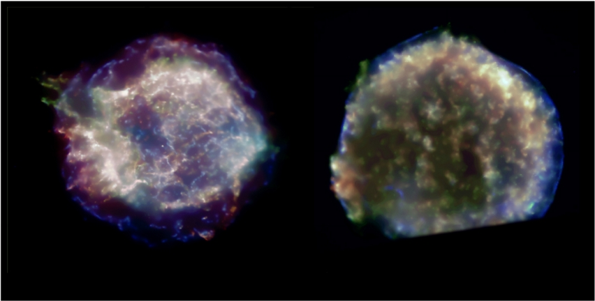 Chandra color images of Cas-A and Tycho SNRs