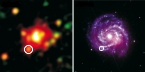 XMM observations of SN 1979c